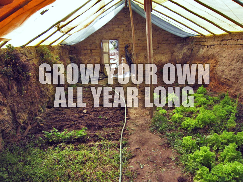 Diy how to build a 300 in ground greenhouse w manual for Inground pool greenhouse