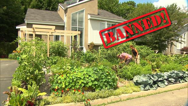 Families Getting Fined for Growing Gardens