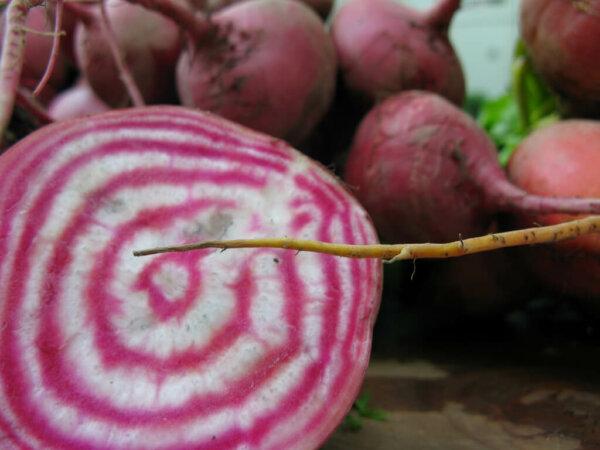 chioggia-beets