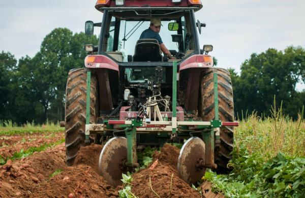 no till gardening: what tilling looks like