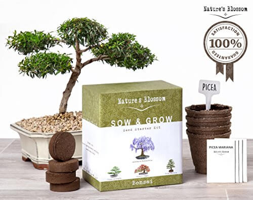 Nature 39 s blossom bonsai tree germination kit insteading for Indoor plant gift ideas