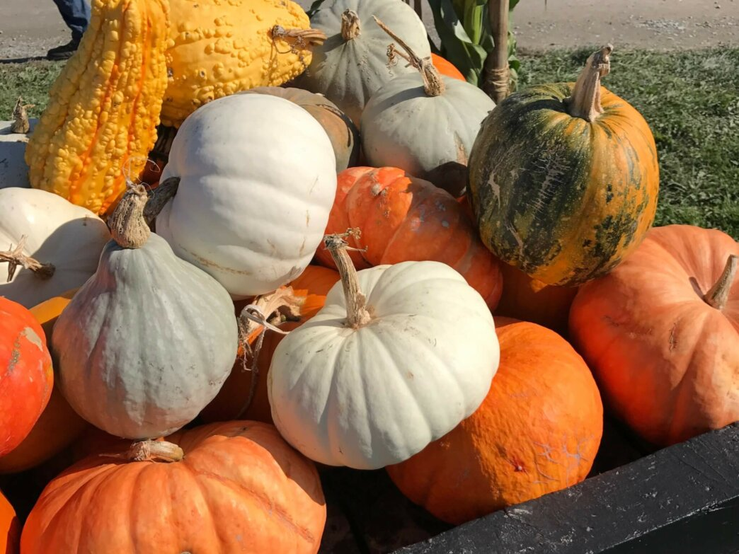 pile of different varieties of squash