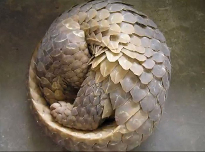 The Fibonacci Sequence in Nature • Insteading