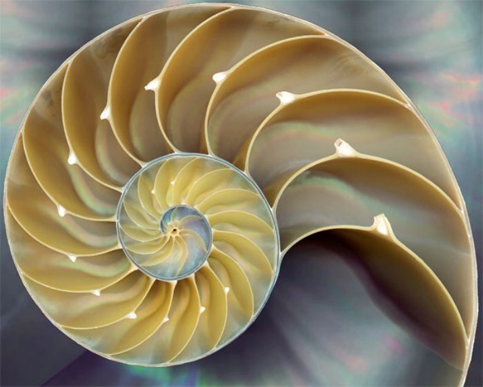 The Fibonacci Sequence In Nature Insteading