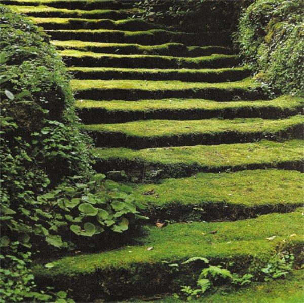 Moss stairway