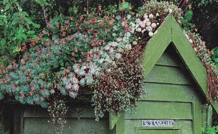 green roofed shed