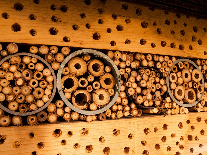 Insect Hotel Insteading