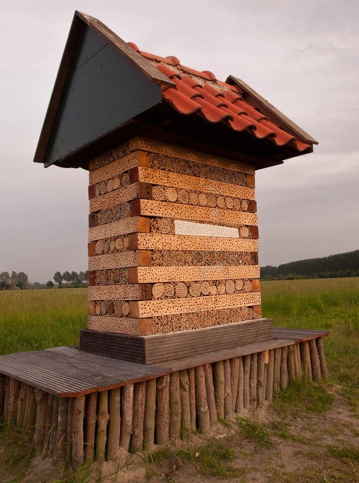 insect habitat