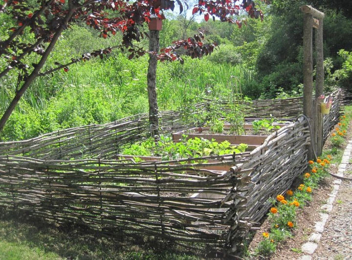 Wattle Fence Made From Saplings And Branches Collected The Wooded Area Of Owner S Yard Woven Like A Basket Between 4 Foot Re Barb Driven 1 Into