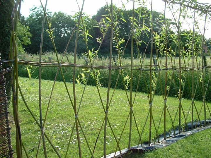 Merveilleux How To Build A Willow Hedge