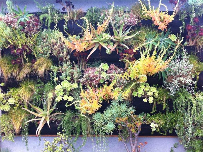 succulent wall