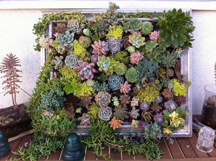 Succulent Vertical Garden. Succulent Wall Art