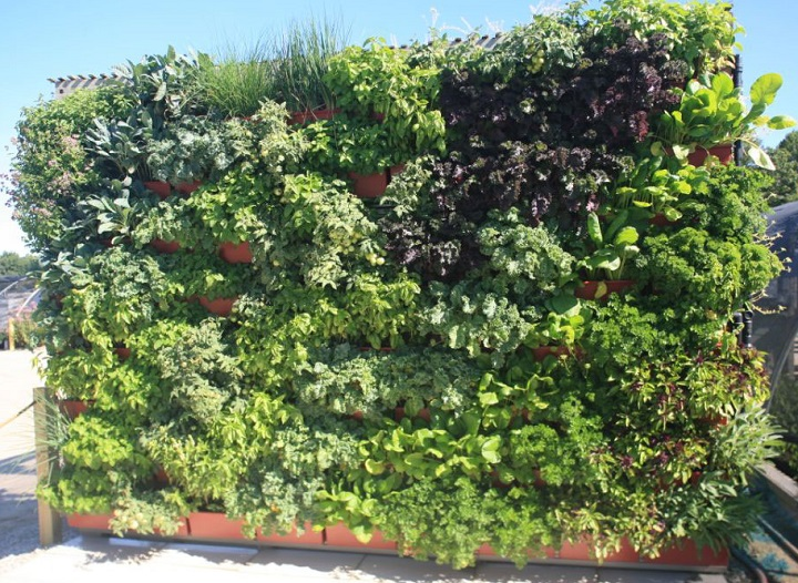 Superbe 12) Flourishing Herb Garden By Live Wall