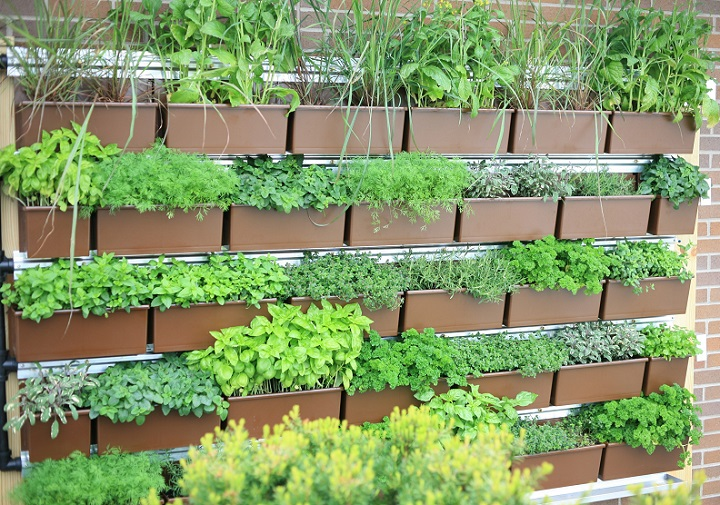 Vertical herb garden insteading Green walls vertical planting systems