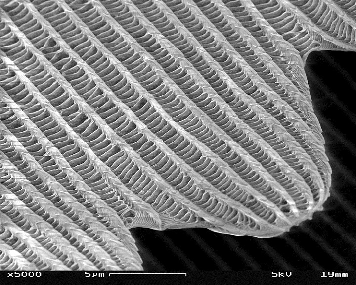 magnified butterfly wing