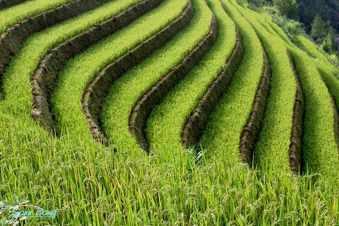 terraced farm