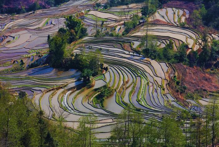 terraced farming