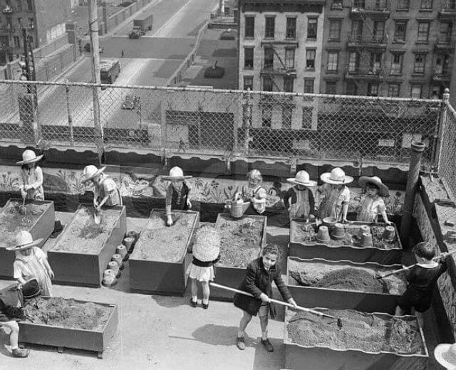 Youth from the NY City Children's Aid Society garden on building rooftop. 1943